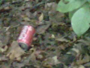 Nope - no tree drank this!
