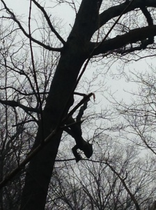 Is there a who hiding/hanging in this tree?  It's true, you just never know....